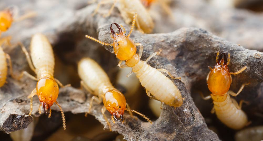 removal you can to professionals bug help service bed how control bugs fight